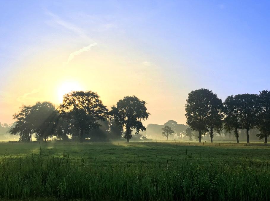 Groenemorgen - De zonnige zijde van ernstig